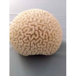 Very Rare White Round Coral Ball
